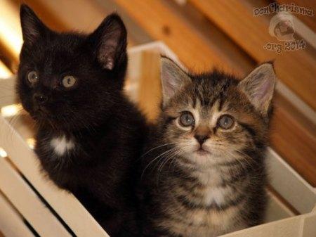 DonCharisma.org-Kittens